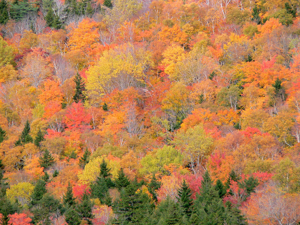 A Colorful View from South Bubble in Acadia National Park